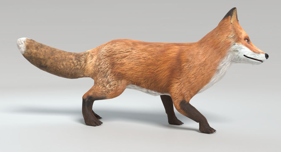 Fox Animated royalty-free 3d model - Preview no. 3