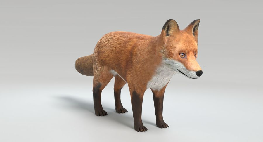 Fox Animated royalty-free 3d model - Preview no. 10