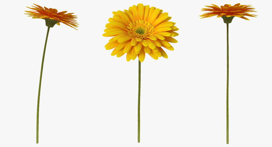 Flor de gerbera amarilla royalty-free modelo 3d - Preview no. 3