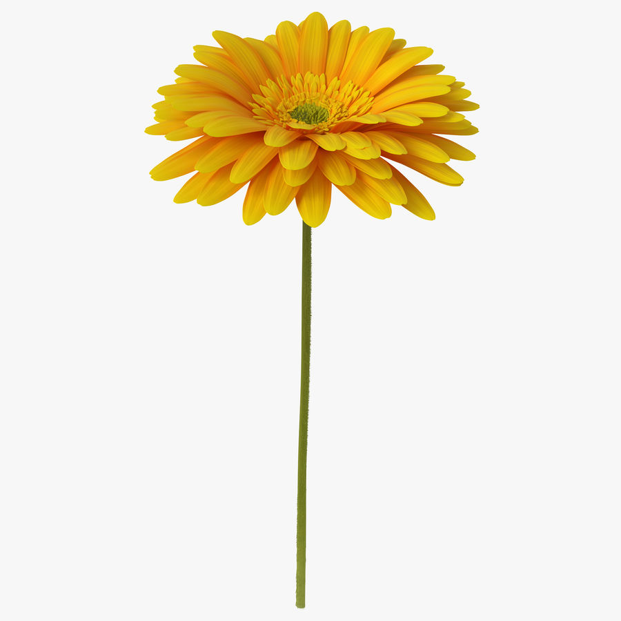 Flor de gerbera amarilla royalty-free modelo 3d - Preview no. 1