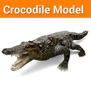 Crocodile Low poly game ready model 3d model