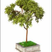 봄 나무 V1 3d model