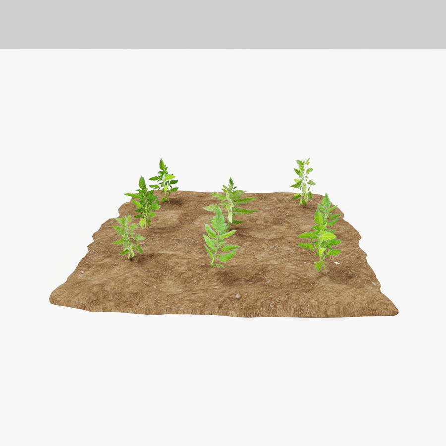Tomato 3 growth stages royalty-free 3d model - Preview no. 9