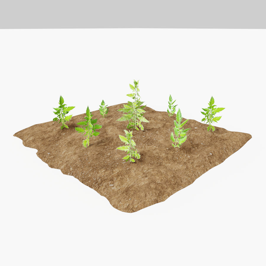 Tomato 3 growth stages royalty-free 3d model - Preview no. 7