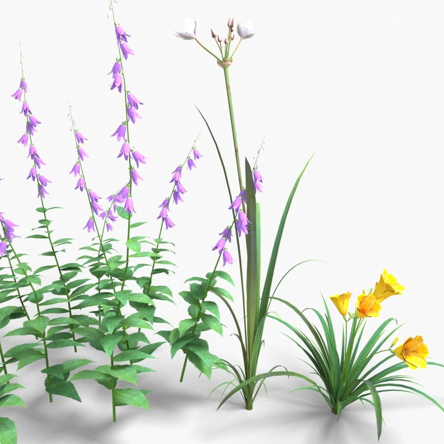 Kwiaty - Liliowiec Campanula Butomus royalty-free 3d model - Preview no. 2