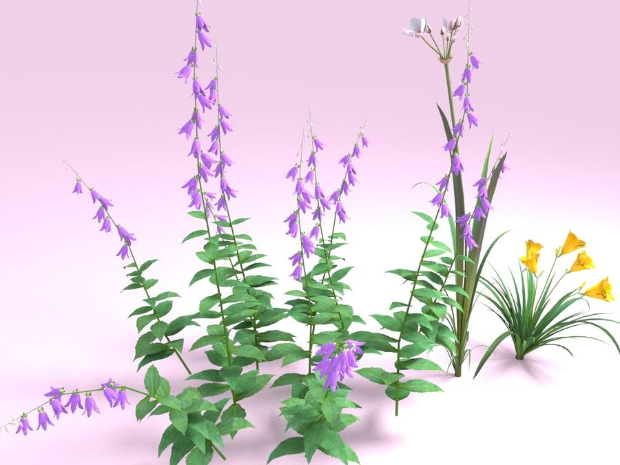 Kwiaty - Liliowiec Campanula Butomus royalty-free 3d model - Preview no. 1