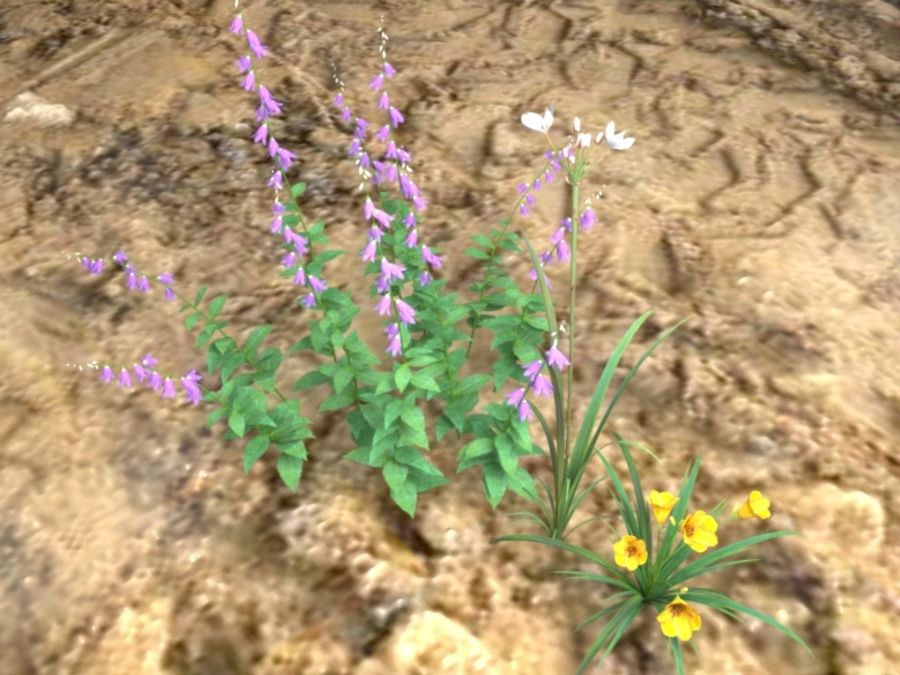 Kwiaty - Liliowiec Campanula Butomus royalty-free 3d model - Preview no. 8