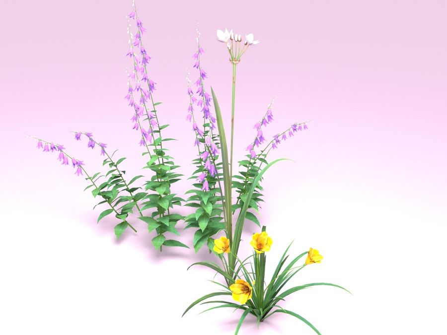 Kwiaty - Liliowiec Campanula Butomus royalty-free 3d model - Preview no. 3
