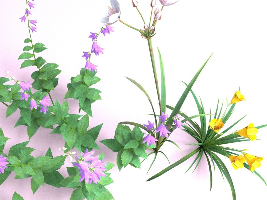 Kwiaty - Liliowiec Campanula Butomus royalty-free 3d model - Preview no. 5