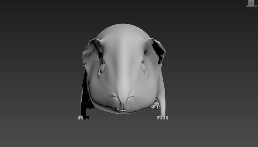 cavia royalty-free 3d model - Preview no. 2