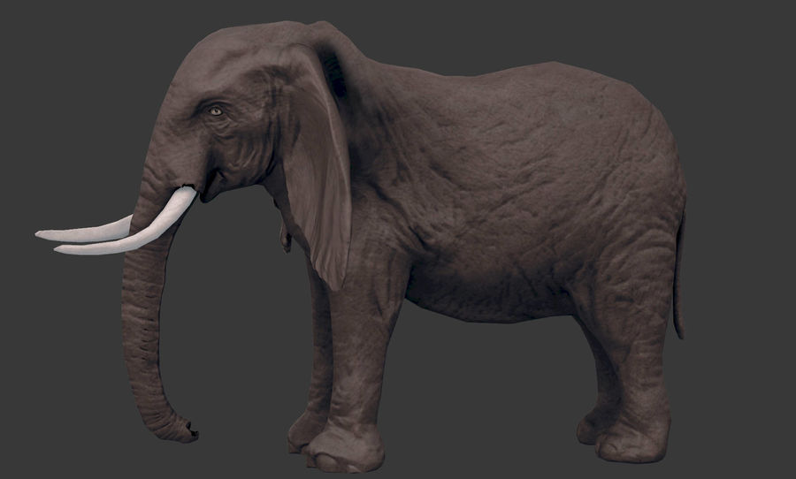 africa animals royalty-free 3d model - Preview no. 17