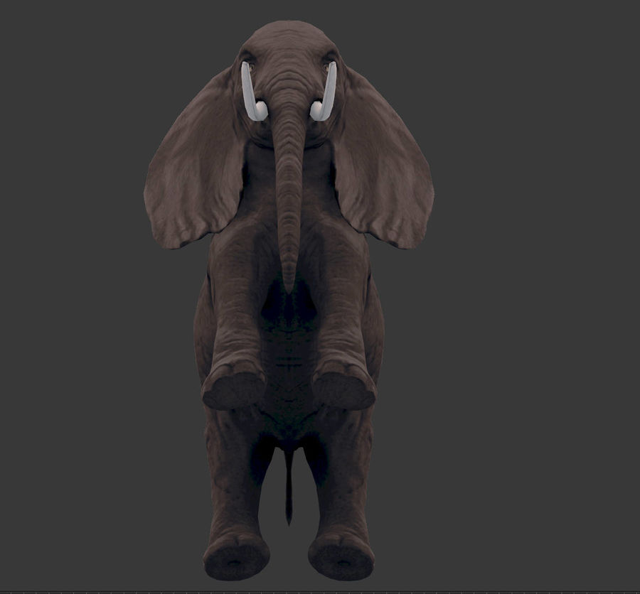 africa animals royalty-free 3d model - Preview no. 21
