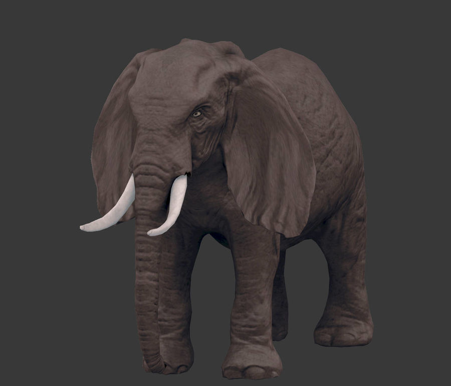 africa animals royalty-free 3d model - Preview no. 16