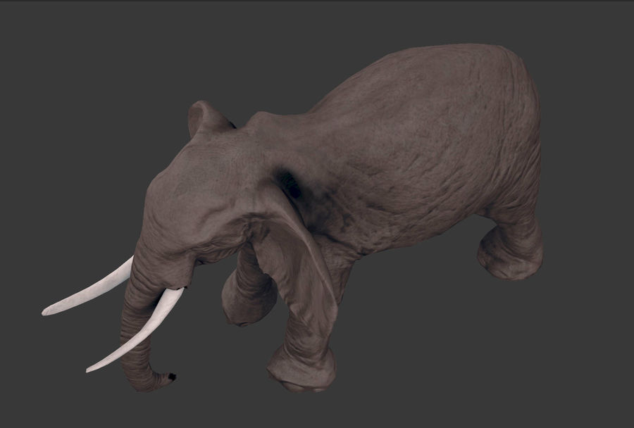 africa animals royalty-free 3d model - Preview no. 20
