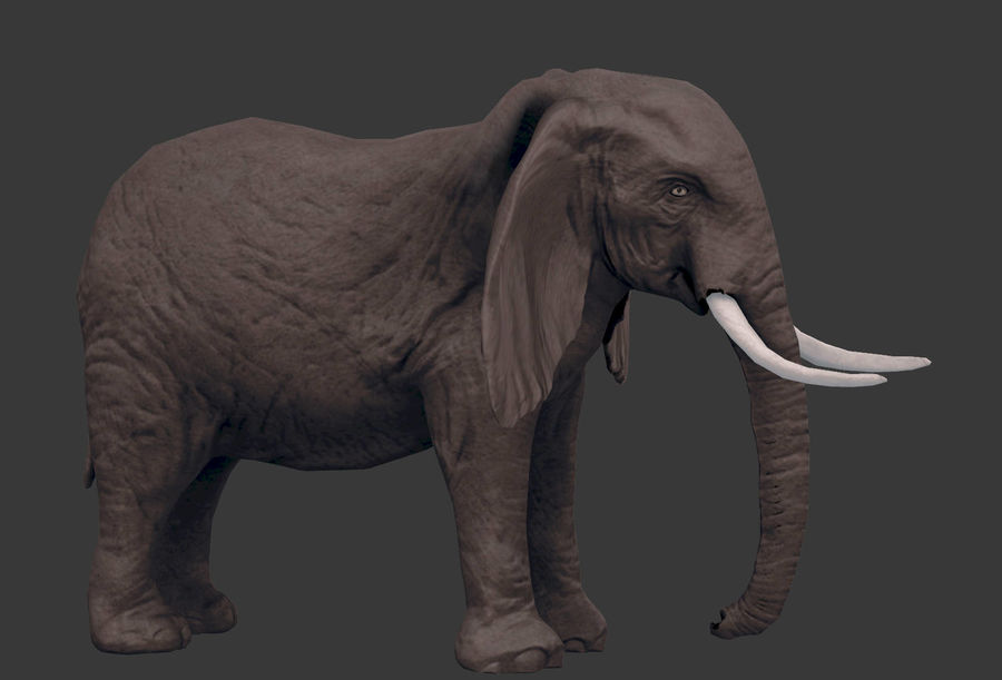 africa animals royalty-free 3d model - Preview no. 18