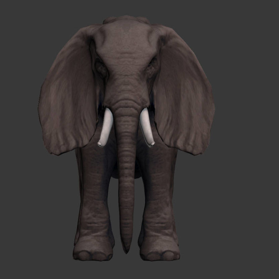 africa animals royalty-free 3d model - Preview no. 10