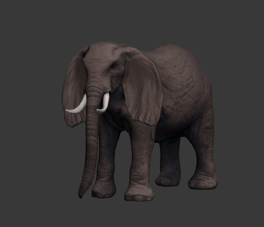 africa animals royalty-free 3d model - Preview no. 7