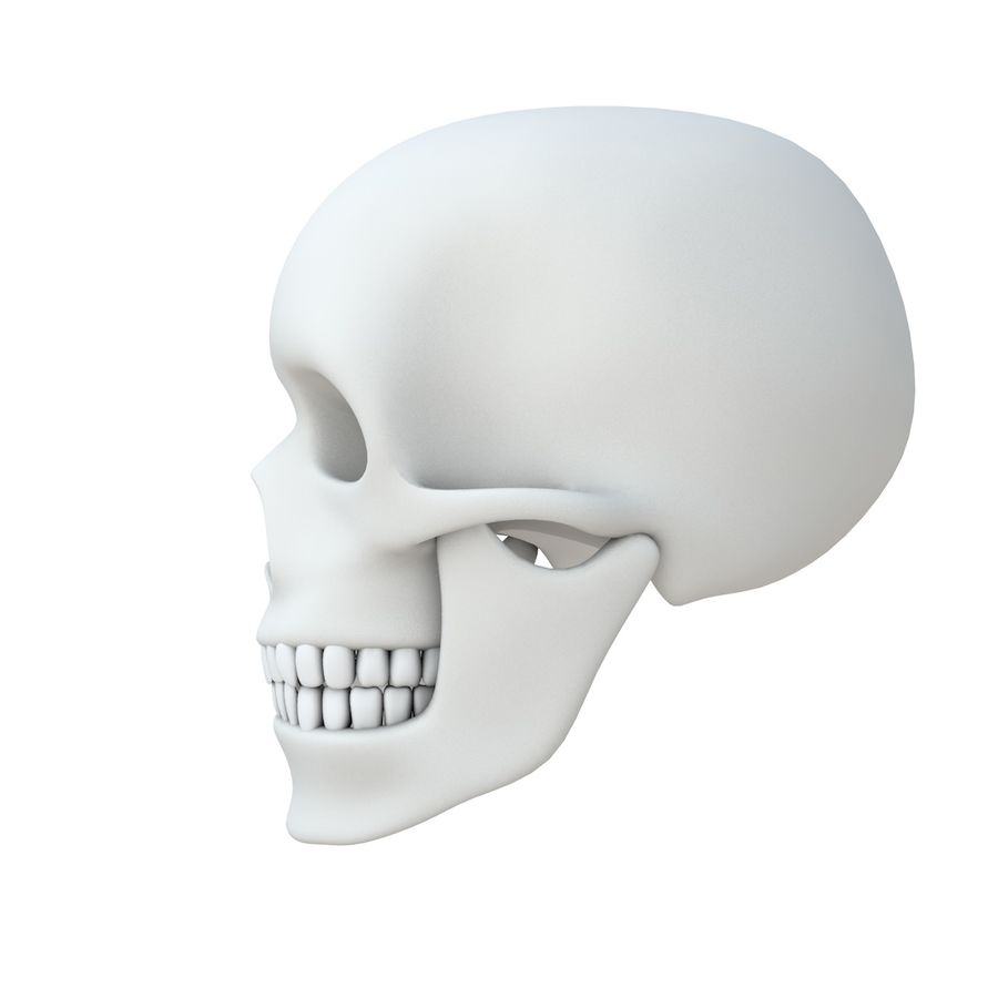 Skull without texture royalty-free 3d model - Preview no. 3