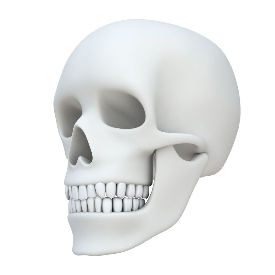 Skull without texture royalty-free 3d model - Preview no. 1