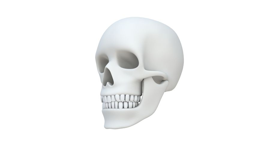 Skull without texture royalty-free 3d model - Preview no. 2