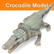 Modèle de crocodile 3d model