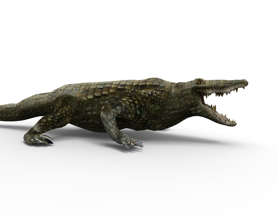krokodil låg poly spel redo royalty-free 3d model - Preview no. 10