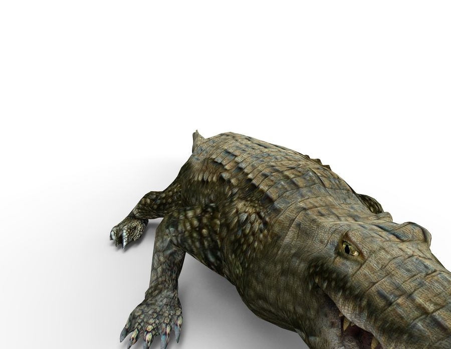 krokodil låg poly spel redo royalty-free 3d model - Preview no. 14