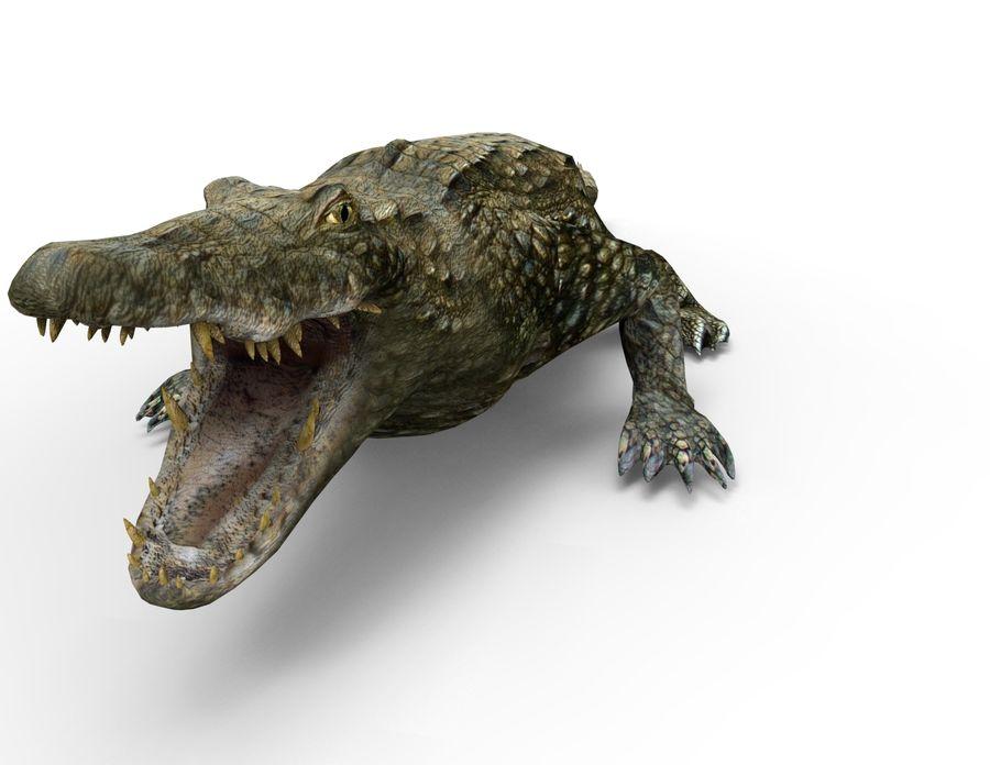 krokodil låg poly spel redo royalty-free 3d model - Preview no. 5