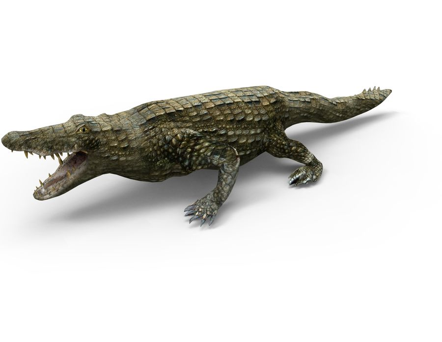 krokodil låg poly spel redo royalty-free 3d model - Preview no. 4