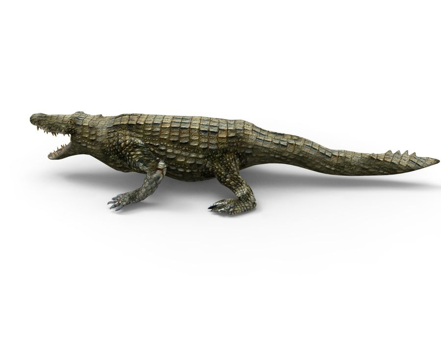 krokodil låg poly spel redo royalty-free 3d model - Preview no. 6
