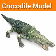 crocodile model low poly game ready 3d model