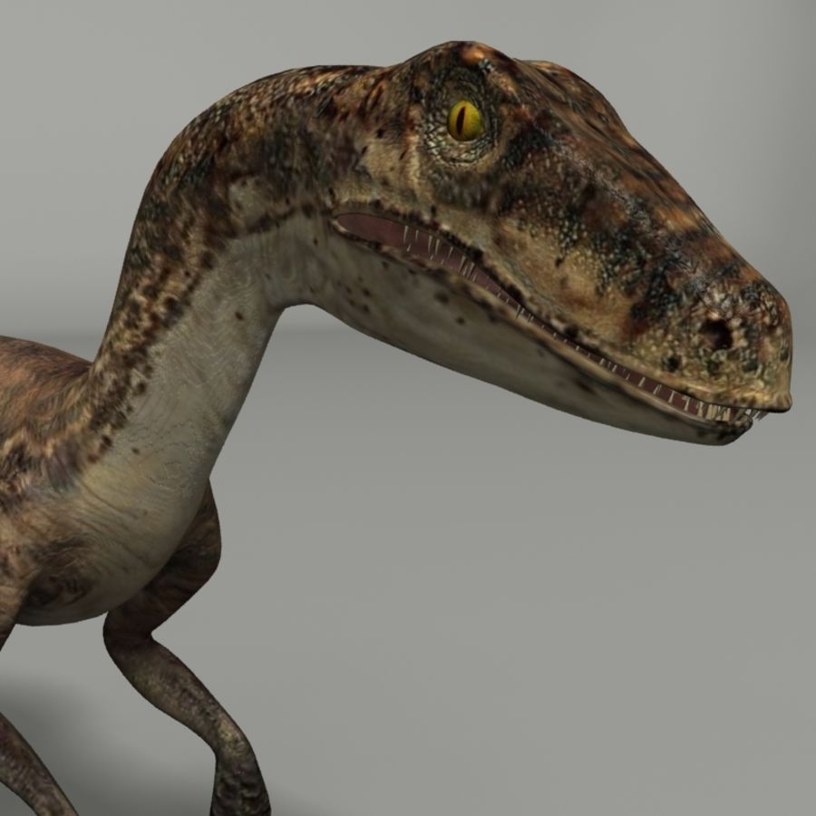 Velociraptor royalty-free 3d model - Preview no. 2