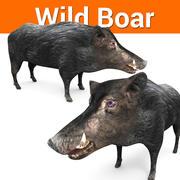 野猪黑 3d model