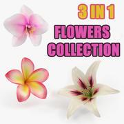 鲜花收藏5 3d model