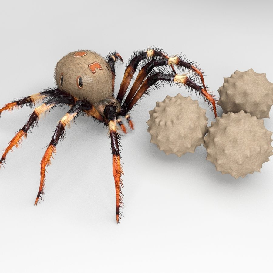 Brown Widow royalty-free 3d model - Preview no. 3