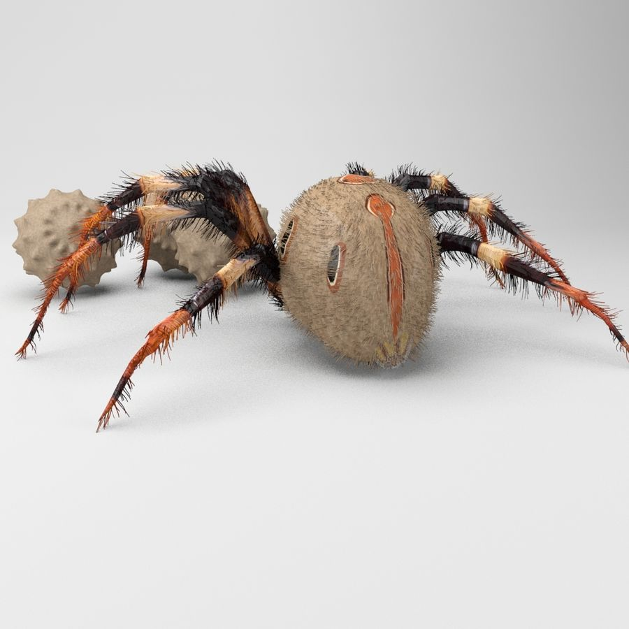 Brown Widow royalty-free 3d model - Preview no. 6