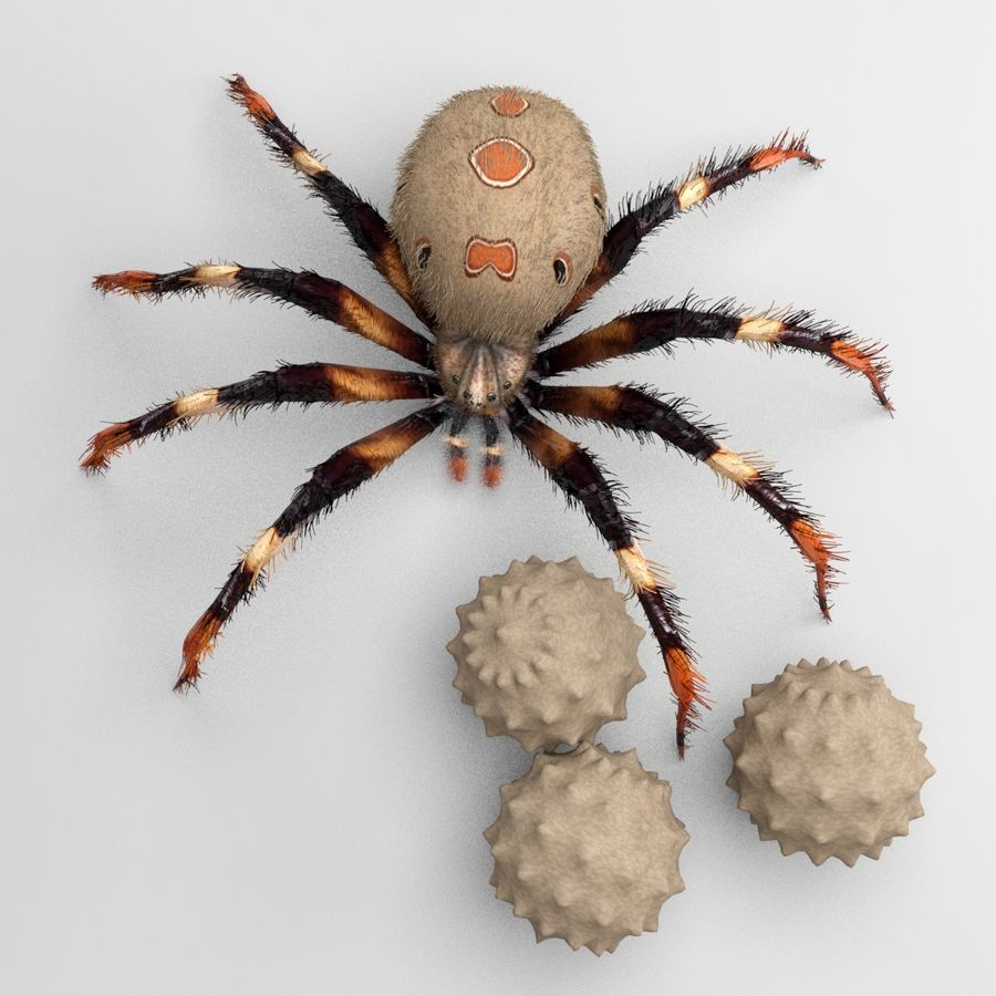 Brown Widow royalty-free 3d model - Preview no. 7