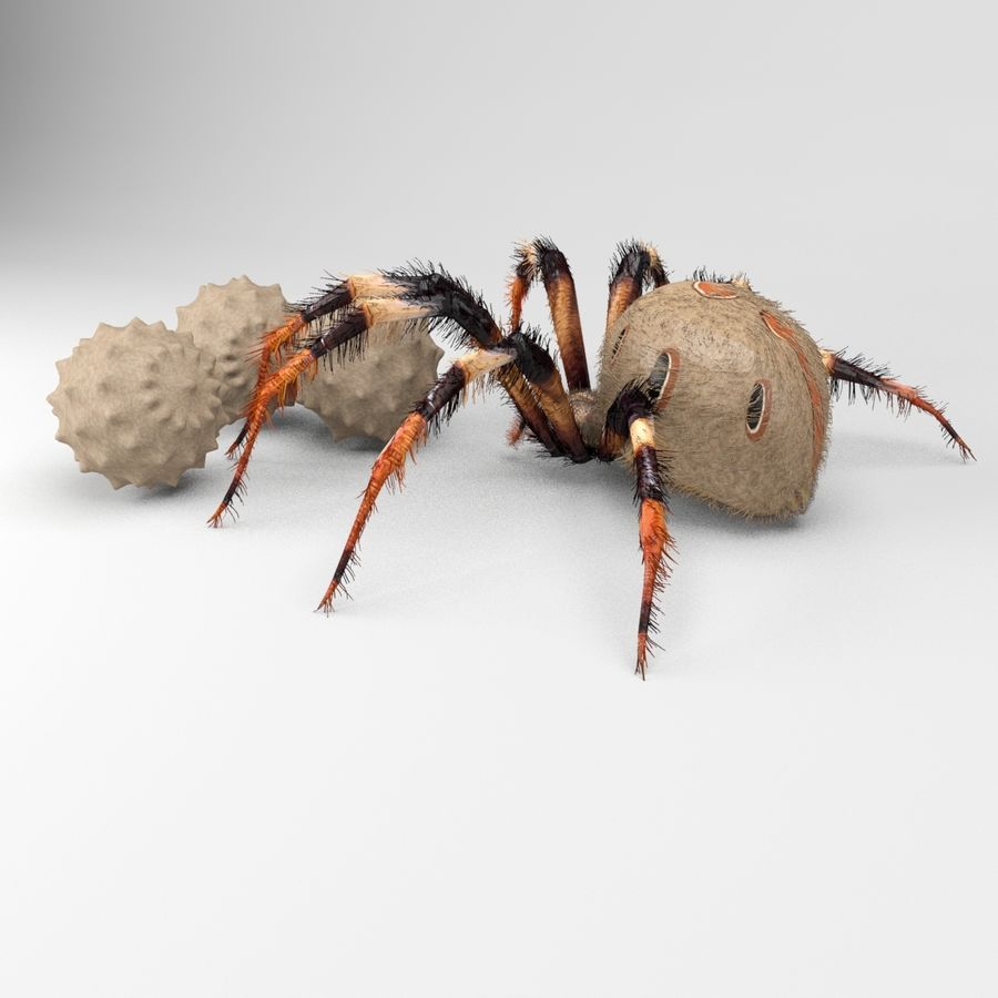 Brown Widow royalty-free 3d model - Preview no. 5