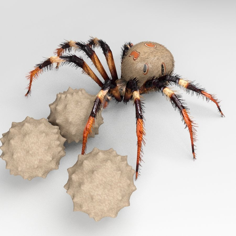 Brown Widow royalty-free 3d model - Preview no. 4