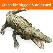 krokodil opgetuigd en geanimeerd 3d model