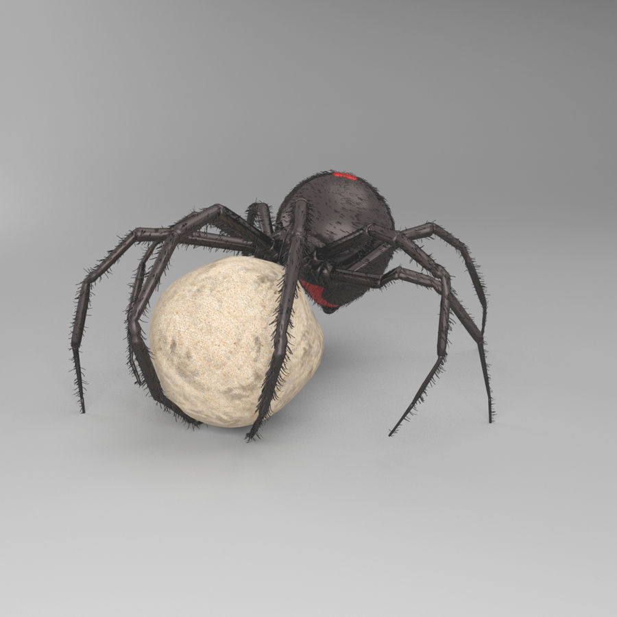 Northern Black Widow royalty-free 3d model - Preview no. 6
