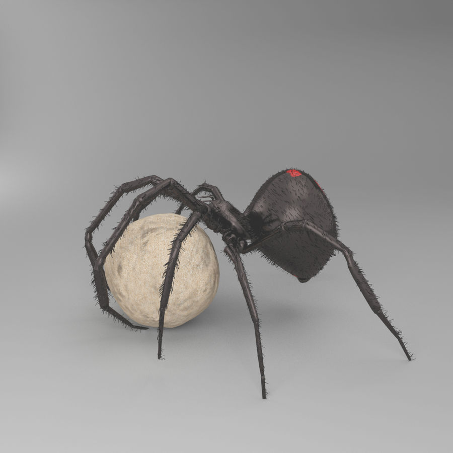 Northern Black Widow royalty-free 3d model - Preview no. 5