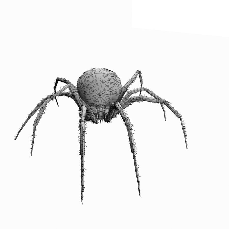 Northern Black Widow royalty-free 3d model - Preview no. 9