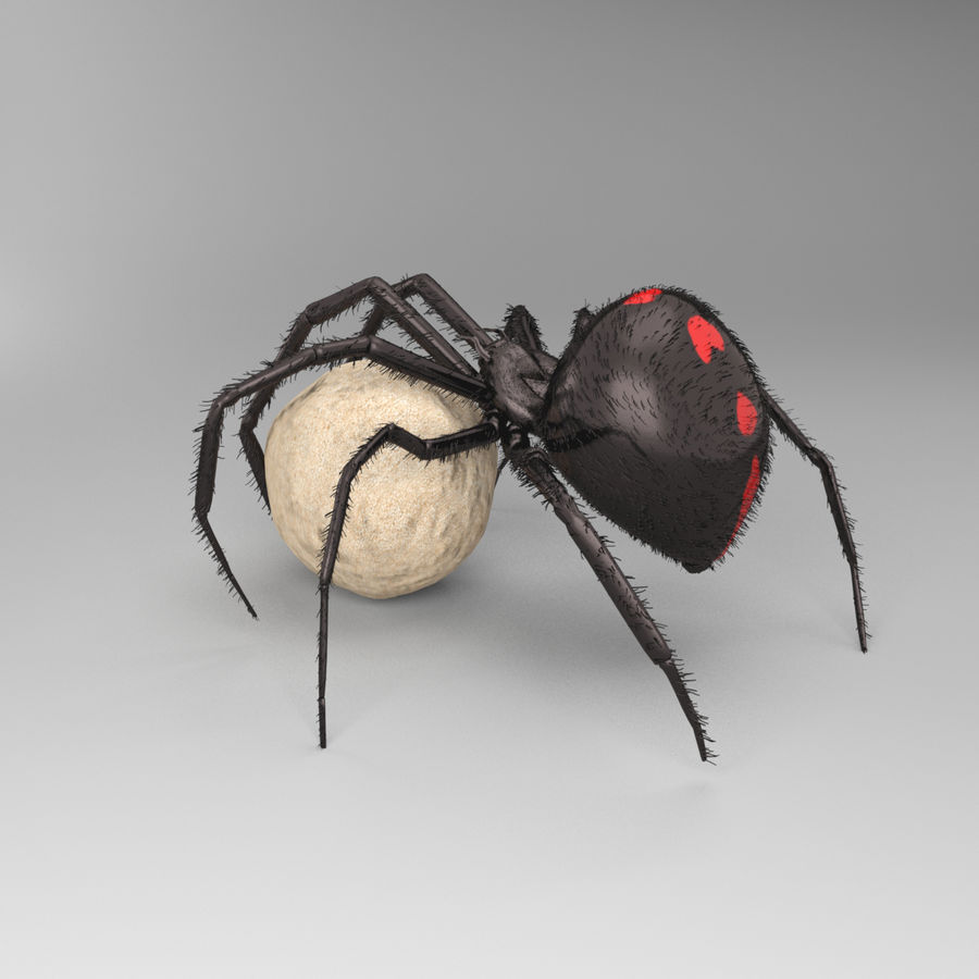 Northern Black Widow royalty-free 3d model - Preview no. 7