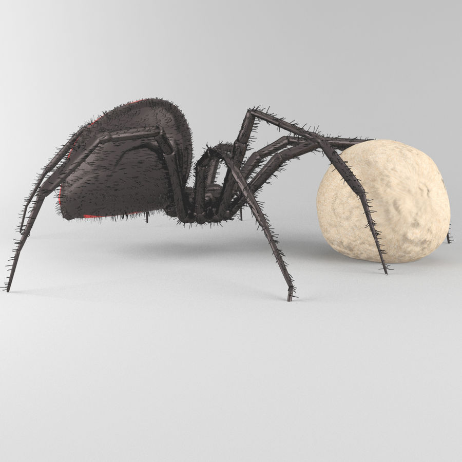 Northern Black Widow royalty-free 3d model - Preview no. 2