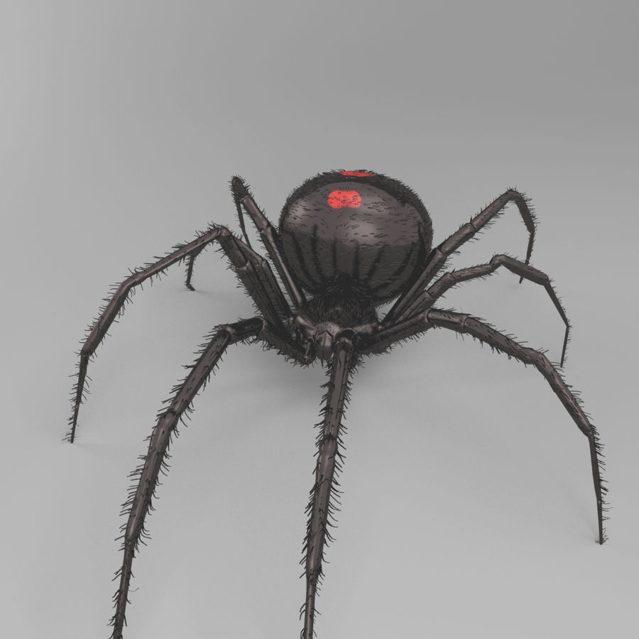 Northern Black Widow royalty-free 3d model - Preview no. 3