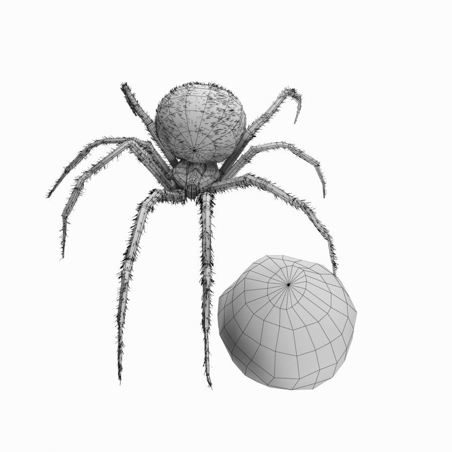 Northern Black Widow royalty-free 3d model - Preview no. 12