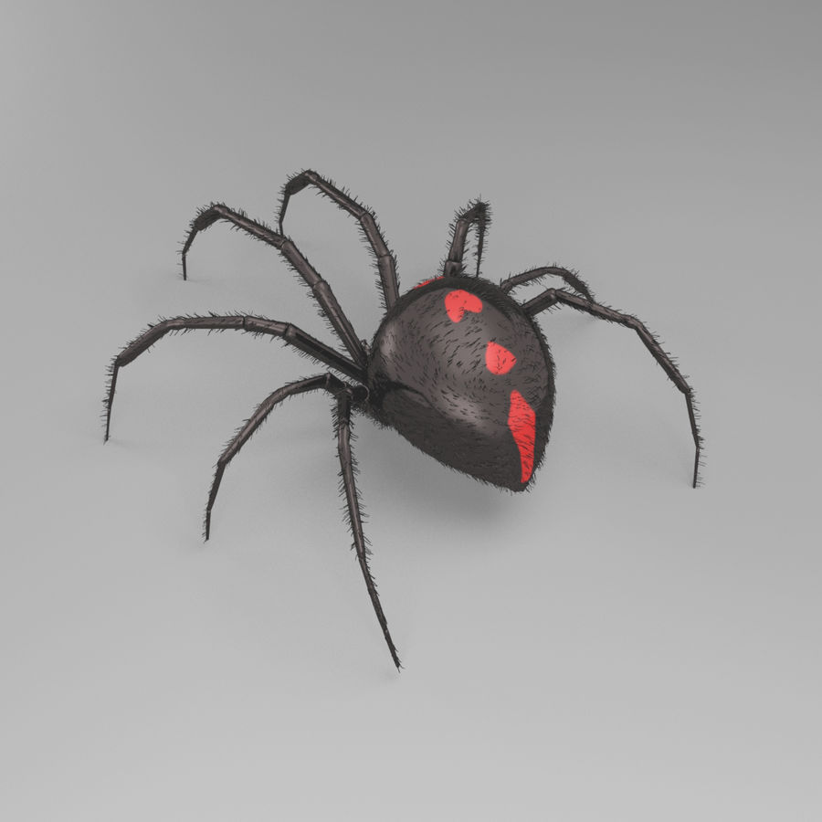 Northern Black Widow royalty-free 3d model - Preview no. 4