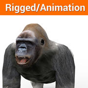 gorilla Animated,rigged 3d model