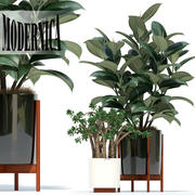 Plants collection 72 Modernica pots 3d model